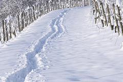 Spuren-im-Schnee