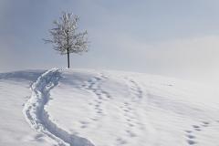 einsamer-Baum